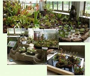 Fleischfressende Pflanzen Kaufen : fleischfressende pflanze kaufen fleischfressende pflanzen ~ Michelbontemps.com Haus und Dekorationen