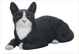 Short Hair Tuxedo Cat