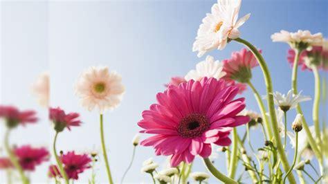 Wallpaper Of Hd Flower by Beautiful Hd Wallpapers For Desktop