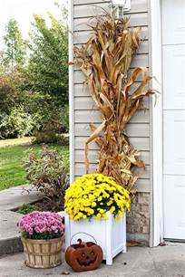 where to buy corn stalks for decorating best 25 corn stalks ideas on corn stalk decor