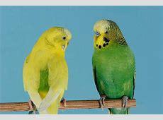 Vogelnamen Schöne Namen für Vögel