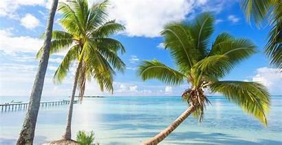 Tropical Summer Palm Bora Beach Polynesia Trees