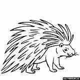 Porcupine Coloring Drawing Pages Animals Line Printable Print Animal Thecolor Drawings Easy Getdrawings Preschool General Results Getcolorings Got sketch template