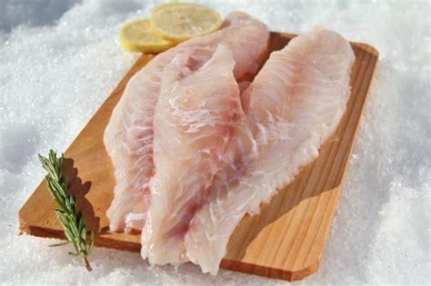 fish grouper fillets frozen fillet eat benefit suppliers nutrient gained