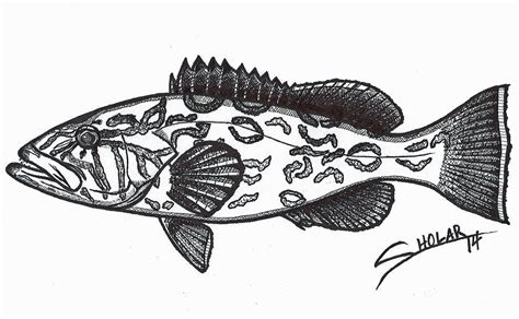 grouper sholar alex drawing drawings 20th uploaded september which fineartamerica