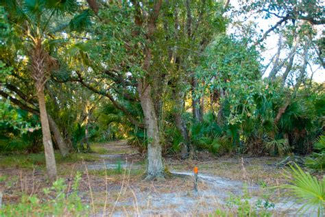 Hammock Trails by Kilpatrick Hammock Trail Florida Hikes