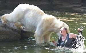 Leopard Seal Vs Polar Bear