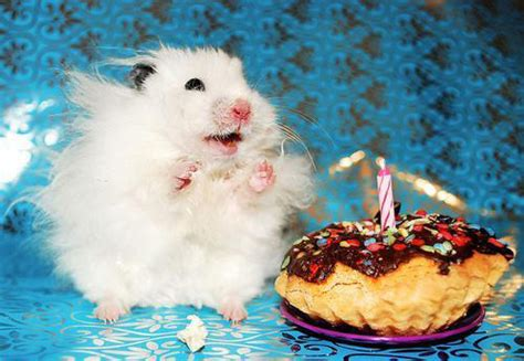 cute animals eating birthday cake   celebrating  birthdays birthday songs  names