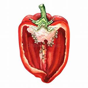 Half Of Red Sweet Bell Pepper  Watercolor Illustration On