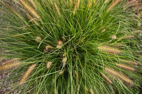 extensive dachbegruenung aufbau geeignete pflanzen fuer