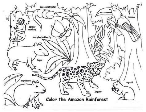 Rainforest Animals Coloring Pages by Tropical Rainforest Animals Coloring Pages Printable