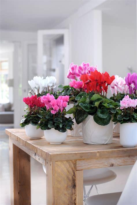 Zimmerpflanzen Richtig Pflegen 7 Tipps by Zimmerpflanzen In Bilder Pflege Tipps Trends Und