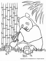 Panda Bamboo Coloring Pages Outline Bear Printable Drawing Forest Eating Clipart Template Clip Getdrawings Kleurplaten Getcolorings Library Homework Sketch Google sketch template