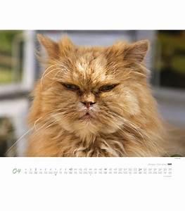 Katzen In Mietwohnung 2016 : n st nn kalend max galli ko ky max galli katzen 2016 ~ Lizthompson.info Haus und Dekorationen