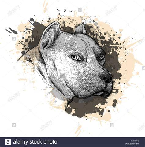 bull dog cartoon stockfotos und bilder kaufen seite