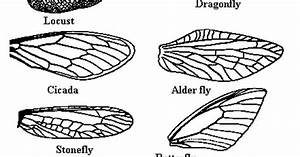 Wing Types