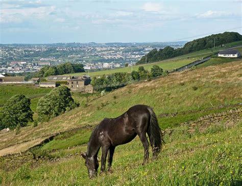crepuscular nocturnal diurnal horse ferus equus horses