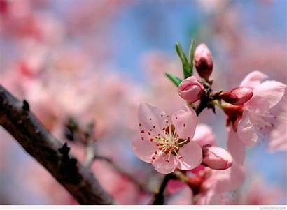 Spring Wallpapers Flowers Flower Awesome