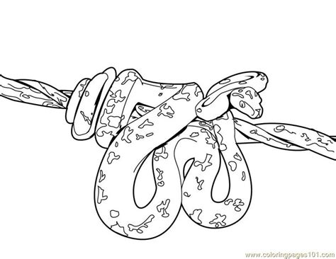 Coloring Pages Snake Reptile Free Printable Page Bebo Pandco