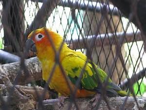 animals | El Salvador from the Inside
