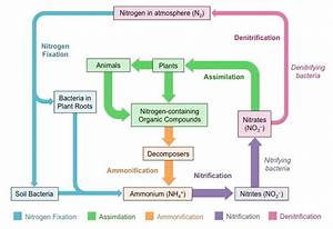 How Can The Nitrogen Cycle Be Described