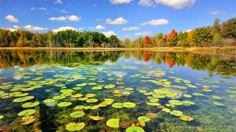 Nature Autumn Forest Lake Wallpaper  1600x900 Resolution
