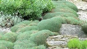 Die Schönsten Steingärten : steingartenpflanzen kaufen welche sind geeignet ~ Bigdaddyawards.com Haus und Dekorationen
