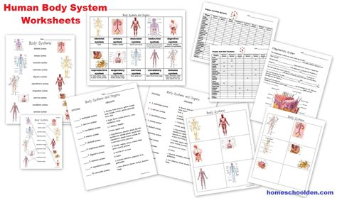 Human Body Worksheets Cells, Tissues, Organs, And The Human Body Systems  Homeschool Den