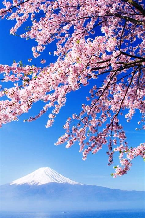 stunning cherry blossom photography japan japan