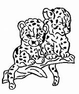 Baby Panther Coloring Animal Cute Drawing Panthers Born Pages Cub Animals Children Getdrawings sketch template