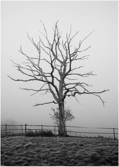images  dead trees  pinterest driftwood