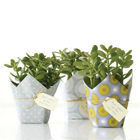 zimmerpflanzen die glueck bringen