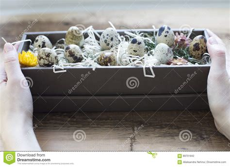 Are you looking for box mockup vectors or photos? Beautiful Box Full Of Quail Eggs Stock Photo - Image of ...