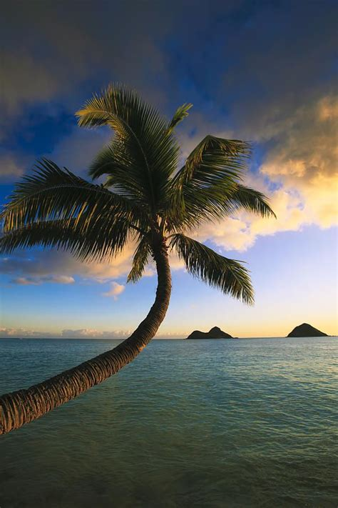 palm tree island ideas  pinterest pictures