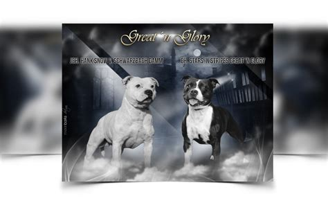breeder webdesign dog kennel design  dog breeder