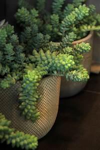 Entretien Plantes Grasses : plantes grasses symphonie florale juvignac montpellier ~ Melissatoandfro.com Idées de Décoration