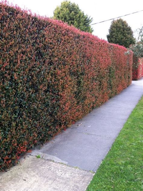 Garten Hecken Ideen by Top 10 Best Plants For Hedges And How To Plant Them