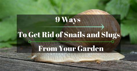 how to get rid of slugs 9 ways to get rid of snails and slugs from your garden gardener corner