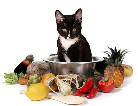 Cooking For Your Cat How To Make A Balanced Homemade Diet