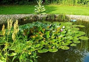 Gartenteich Richtig Anlegen : ein gartenteich als heimische oase ~ Michelbontemps.com Haus und Dekorationen