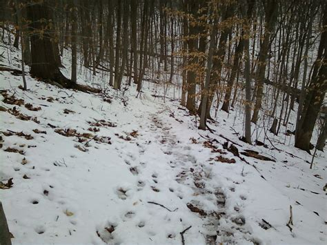 Blog Nature Trail Templates by Dismal Harmony Brooks Nature Area The Unofficial Site Of