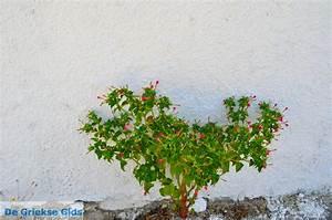 Kamilari heraklion kreta urlaub in kamilari griechenland for Katzennetz balkon mit hotel corina paloma garden kreta