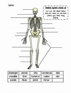 Skeletal System Match Up Pdf