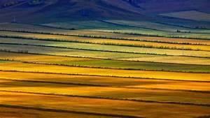 Colorful, Prairie, Hulunbuir, Grasslands, Inner, Mongolia