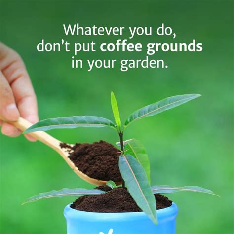 Pothos are among the friendliest houseplants. Whatever You Do, Don't Put Coffee Grounds in Your Garden | Coffee grounds for plants, Coffee ...