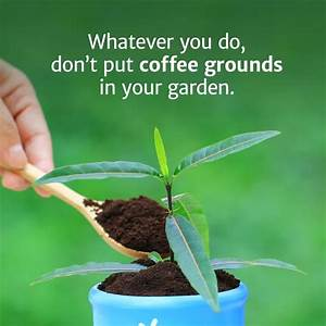 whatever you do don 39 t put coffee grounds in your garden