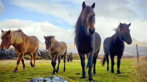 amazing horses hour calm