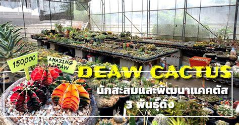 DEAW CACTUS นักสะสมและพัฒนาแคคตัส 3 พันธุ์ดัง - ต้นไม้และสวน