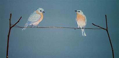 Birds Wire Related Animal Animals