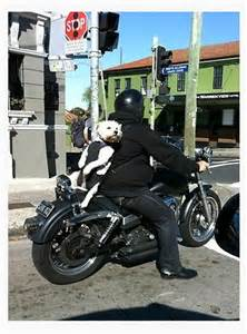 Dog in Backpack On Motorcycle